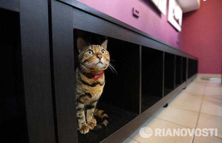 Кот-кафе Республика кошек в Санкт-Петербурге