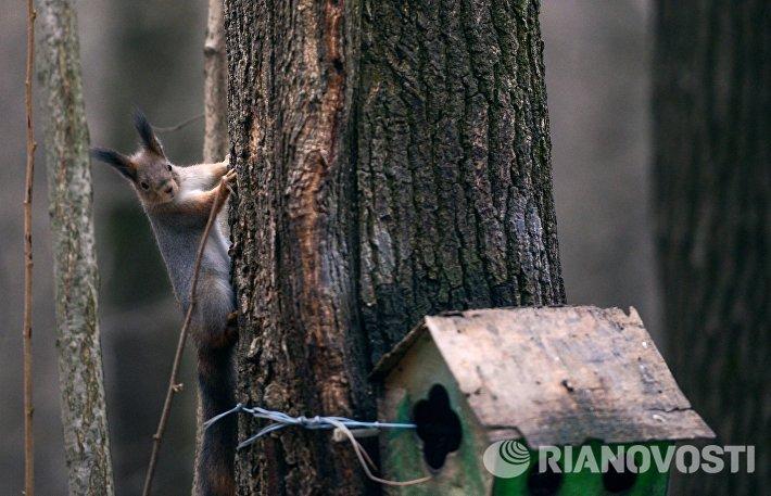 Белка на дереве в Воронцовском парке