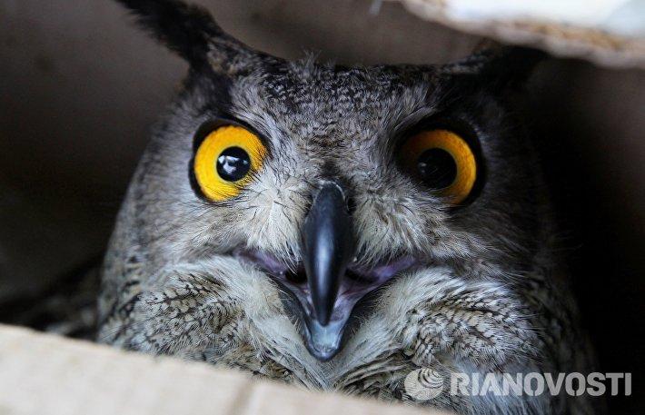 Международный день птиц в частном зоопарке Владивостока