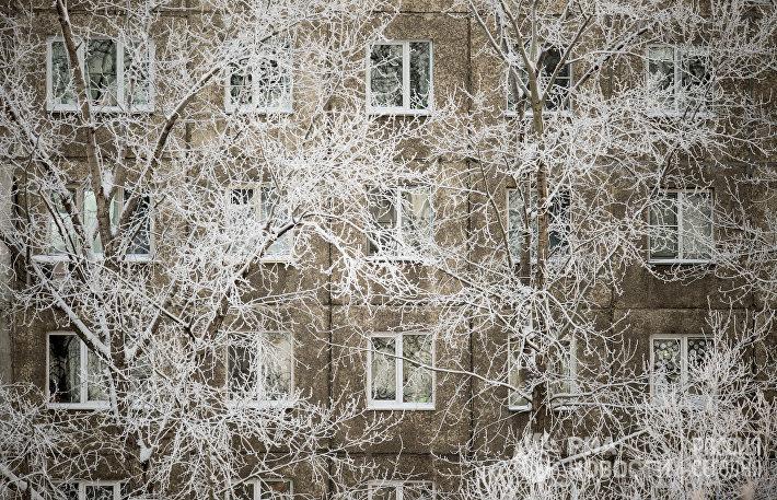 Покрытые инеем ветки деревьев у жилого дома