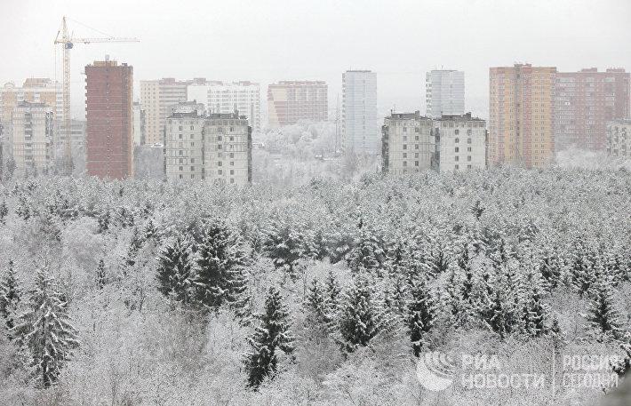 Заснеженный лес на фоне города Троицка